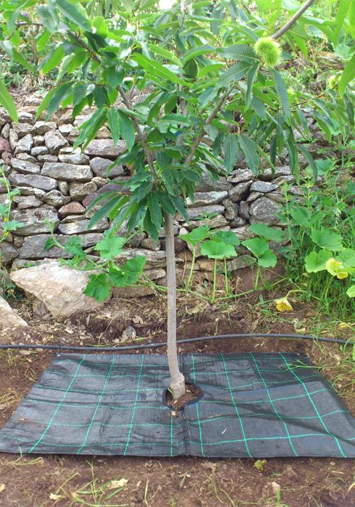 Δέντρα - Φυτά