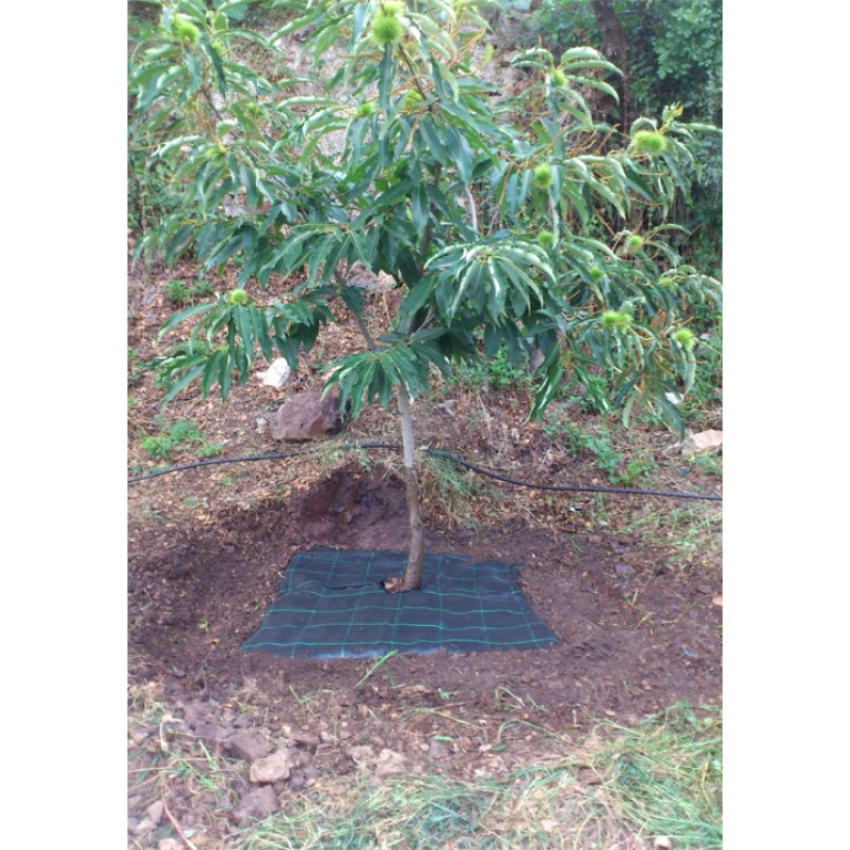 60cm x 60cm   2 φερμουάρ για δέντρα, αμπέλια και φυτά (ύφασμα τετράγωνο εδαφοκάλυψης κωδ. 90101)